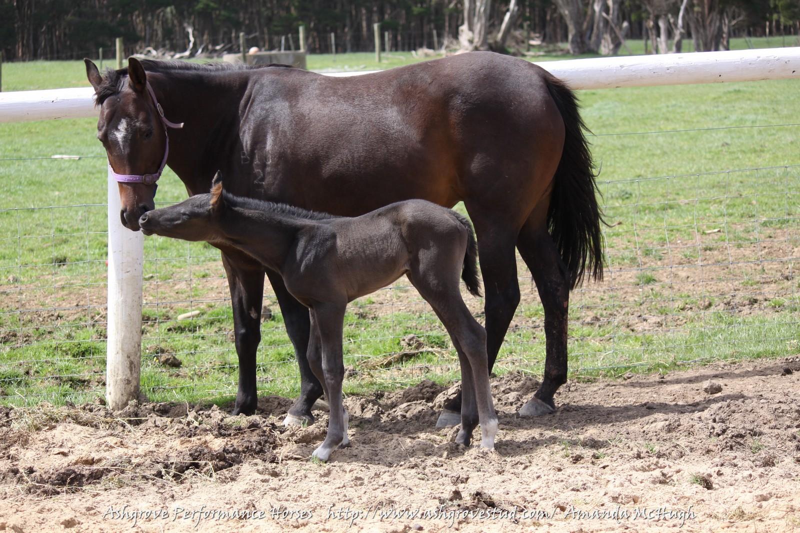 Foals 28-10-14 024