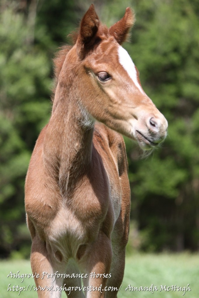 Foals 28-10-14 127 - Copy