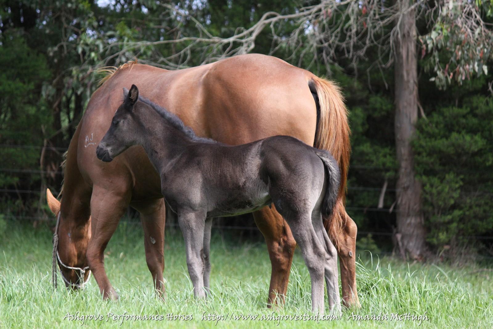 Foals 28-10-14 154