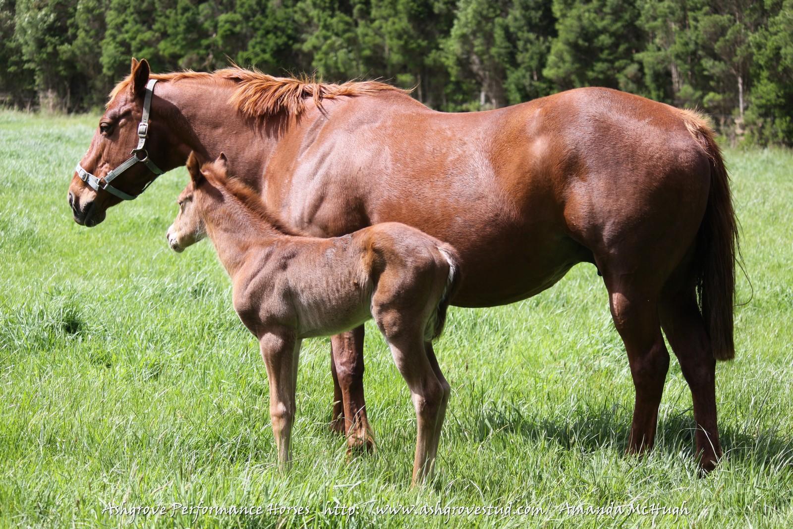 Foals 28-10-14 186 - Copy