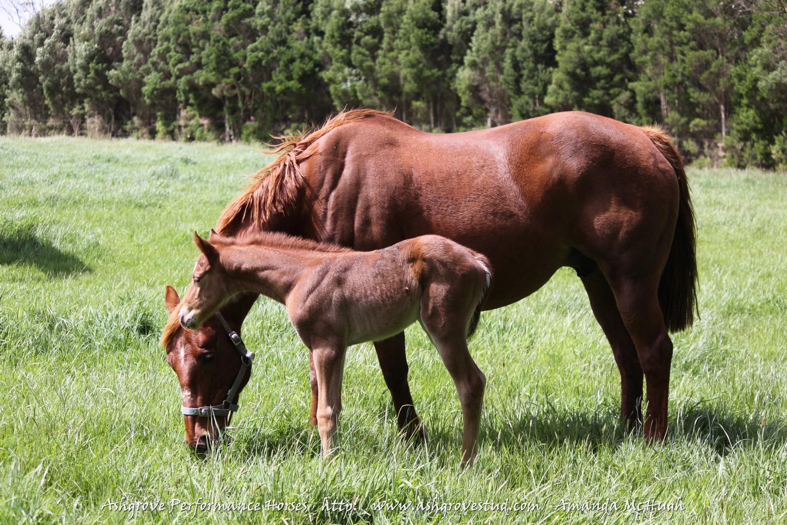Foals 28-10-14 193 - Copy