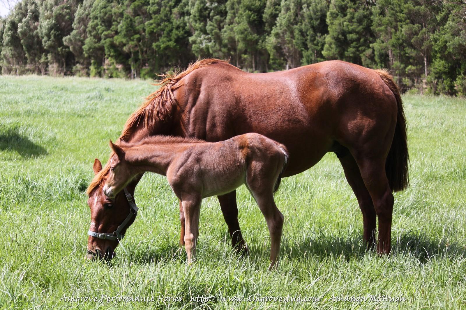 Foals 28-10-14 194 - Copy