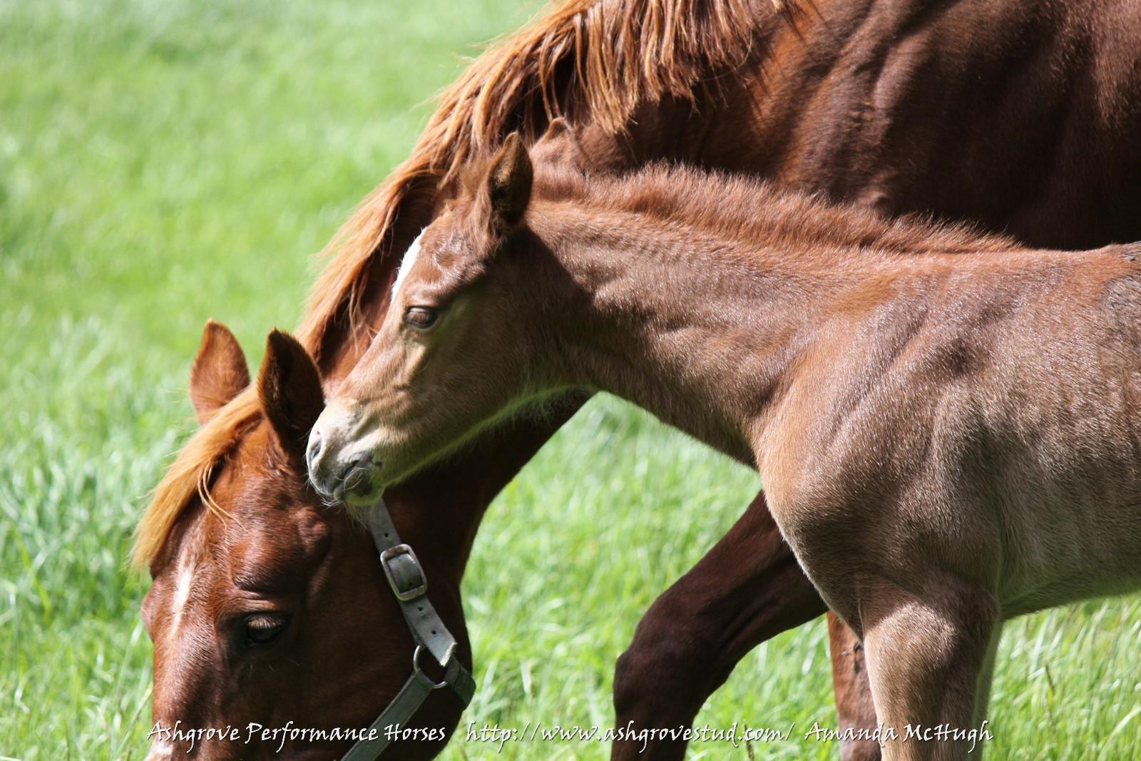 Foals 28-10-14 196 - Copy