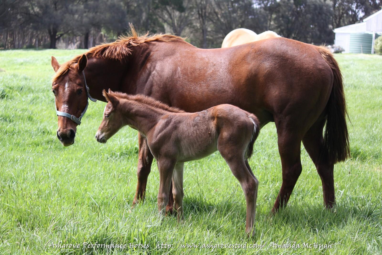 Foals 28-10-14 199 - Copy