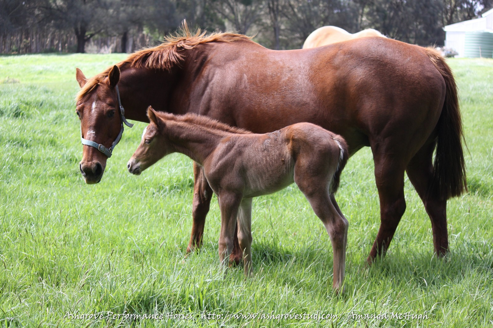 Foals 28-10-14 200