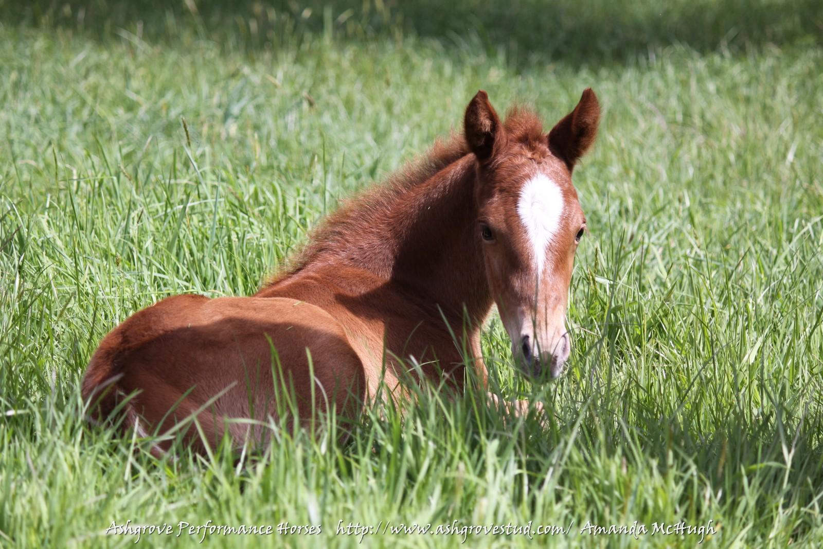 Foals 28-10-14 246 - Copy