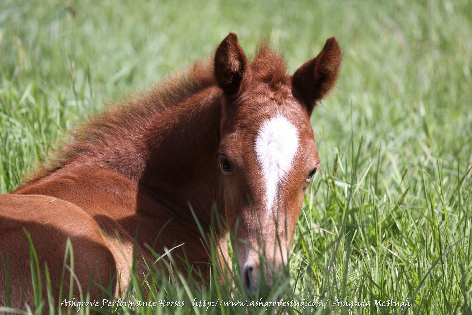 Foals 28-10-14 247 - Copy