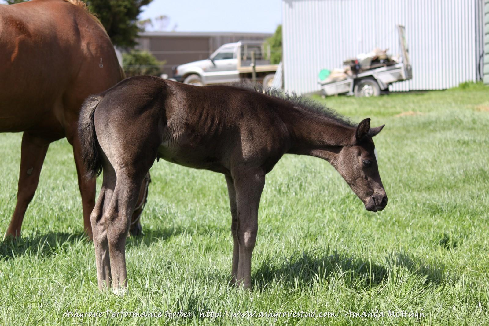 Foals 28-10-14 372