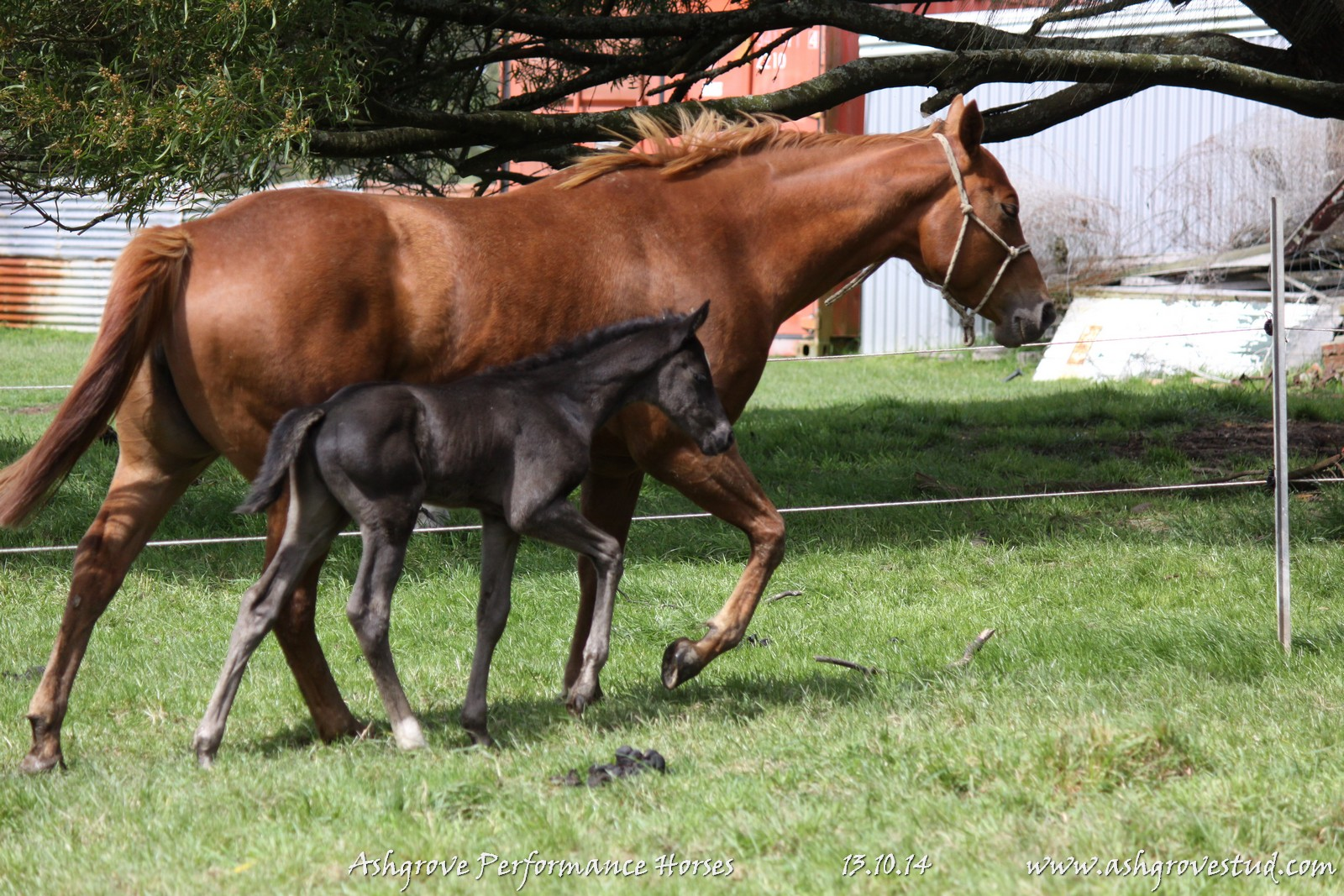 Foals and yearlings 13.10.14 012