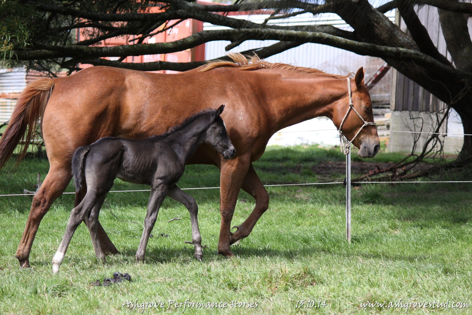 Foals and yearlings 13.10.14 013