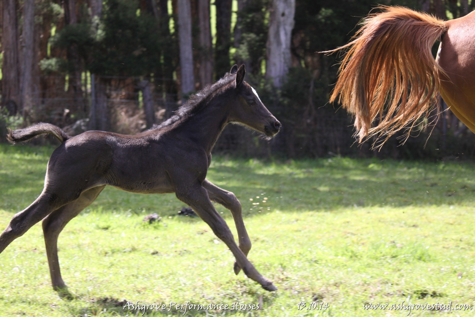 Foals and yearlings 13.10.14 073