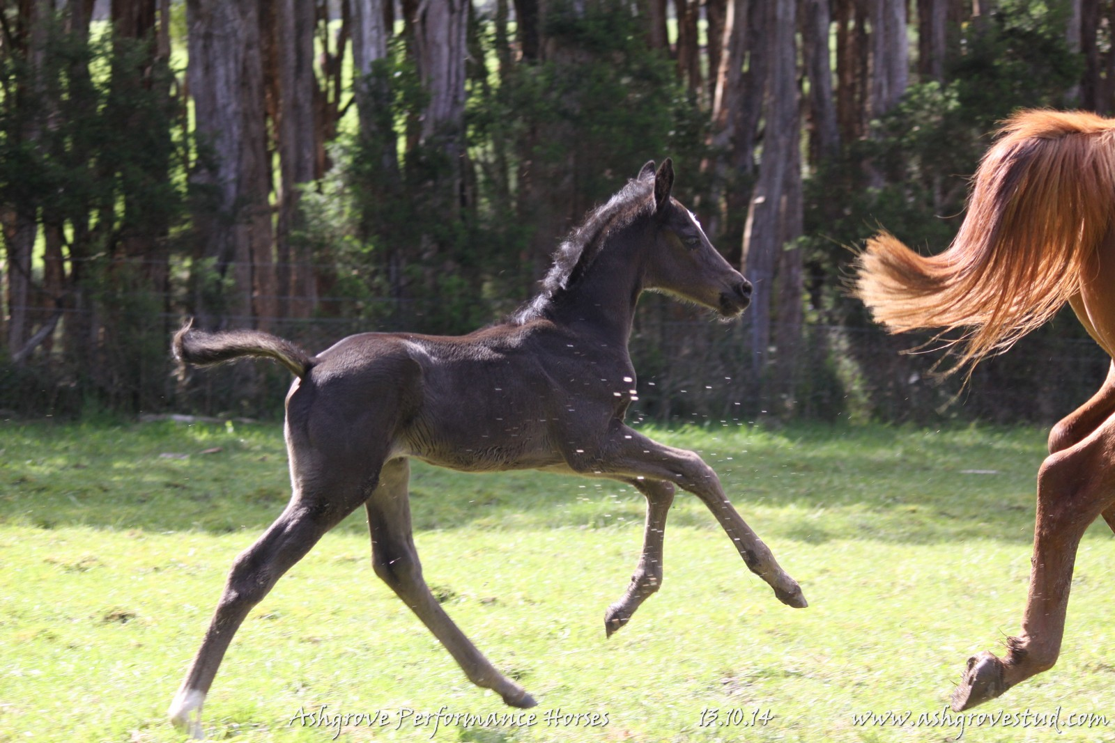 Foals and yearlings 13.10.14 075