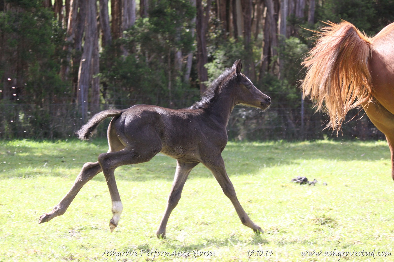 Foals and yearlings 13.10.14 076