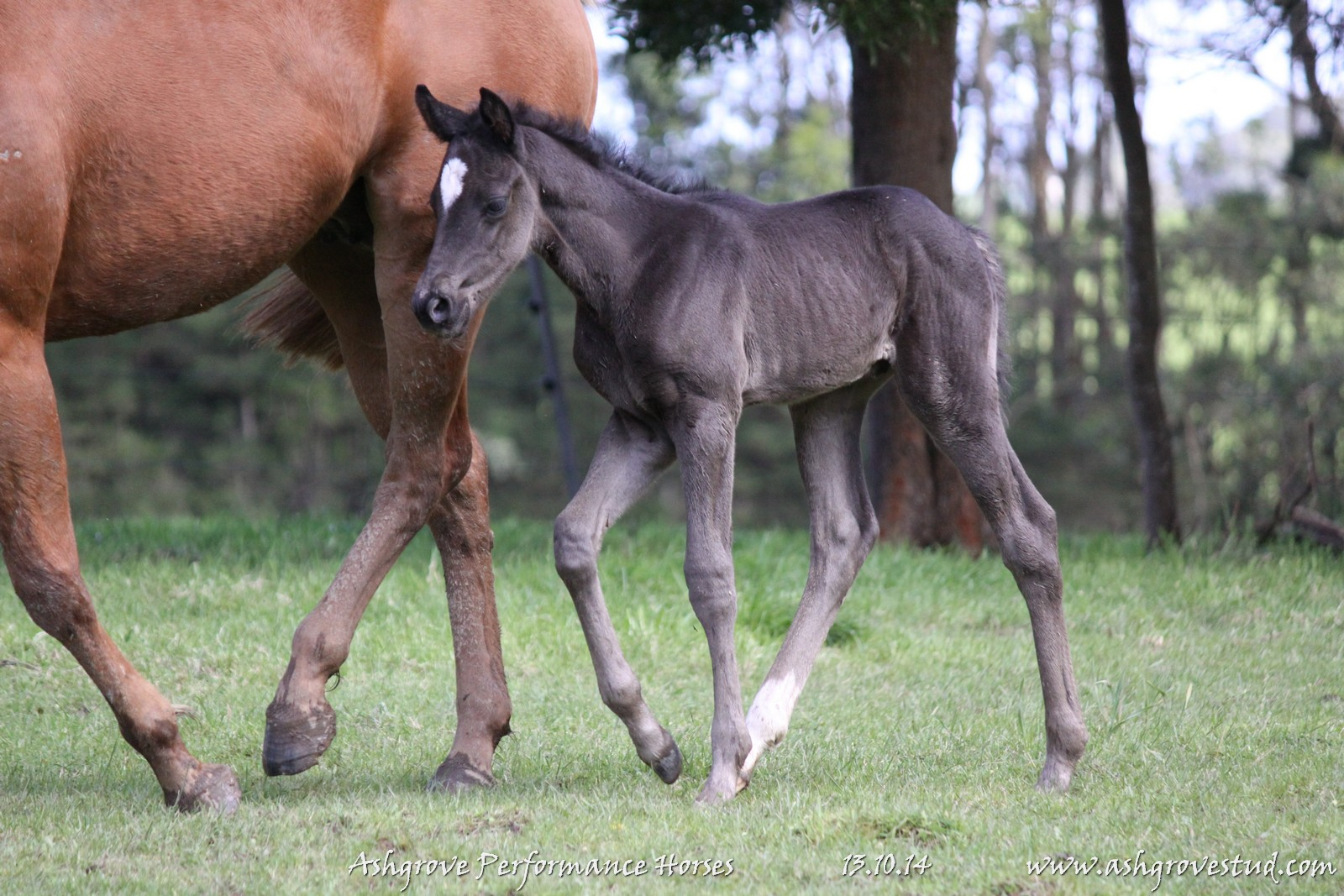 Foals and yearlings 13.10.14 104