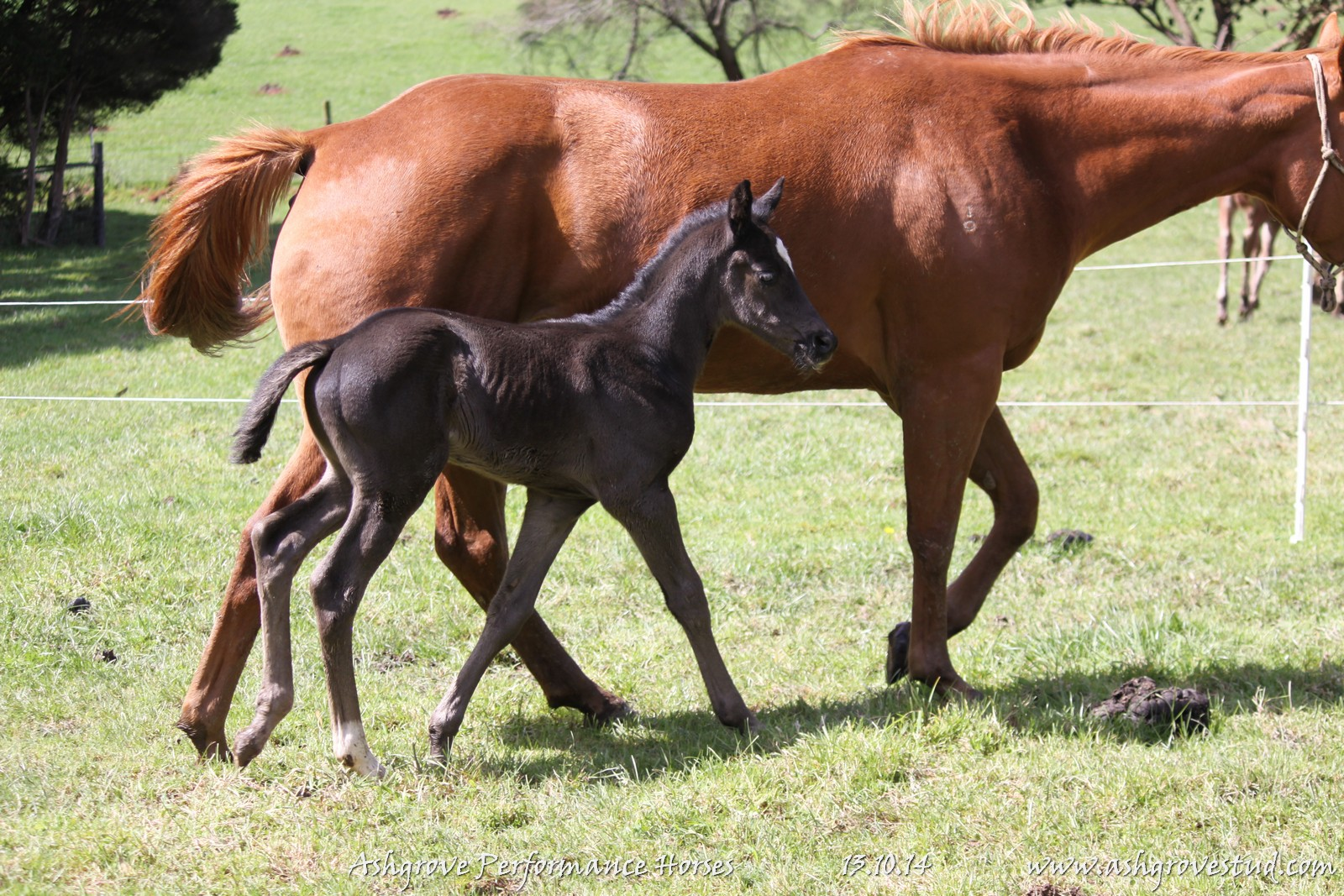 Foals and yearlings 13.10.14 125
