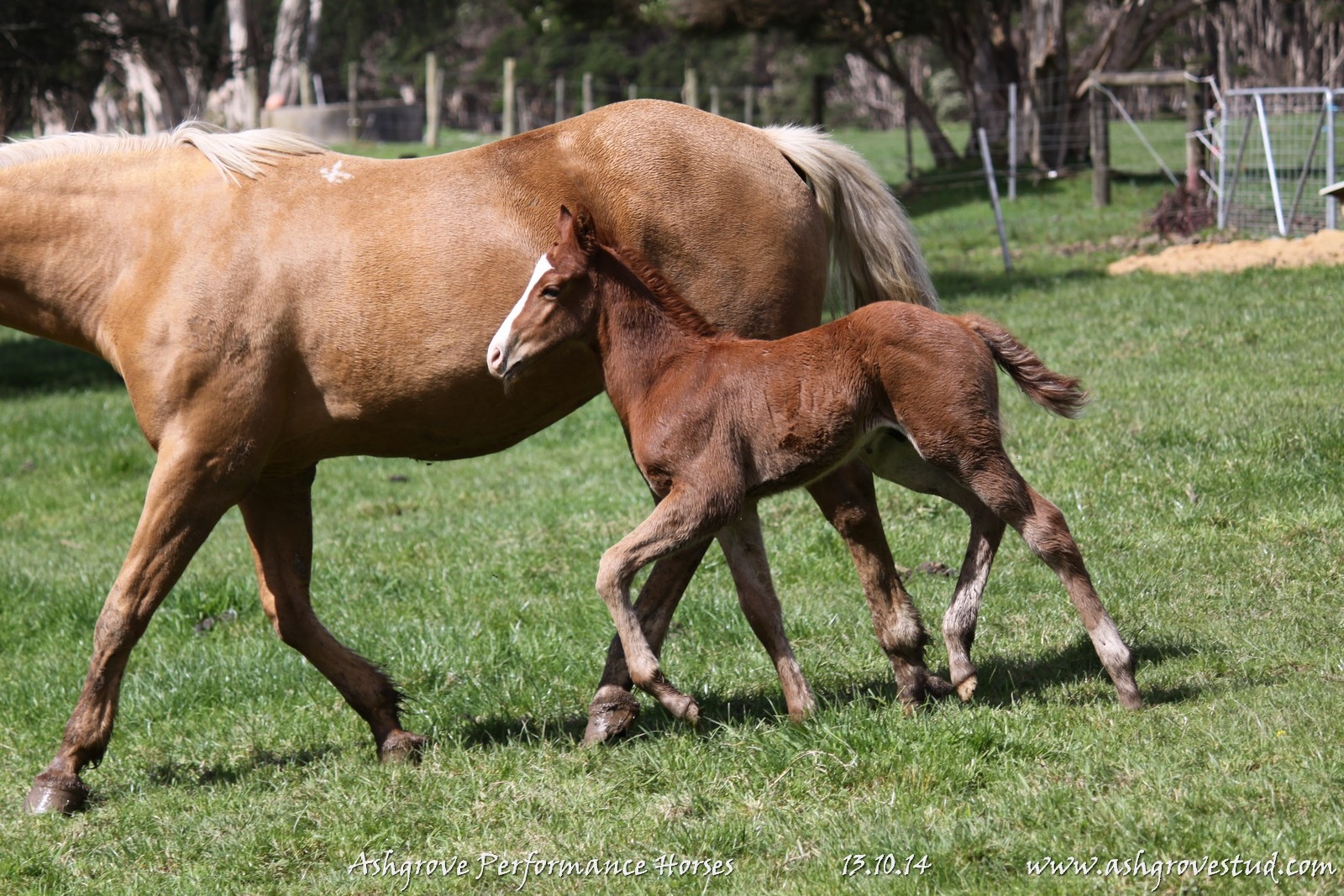 Foals and yearlings 13.10.14 132