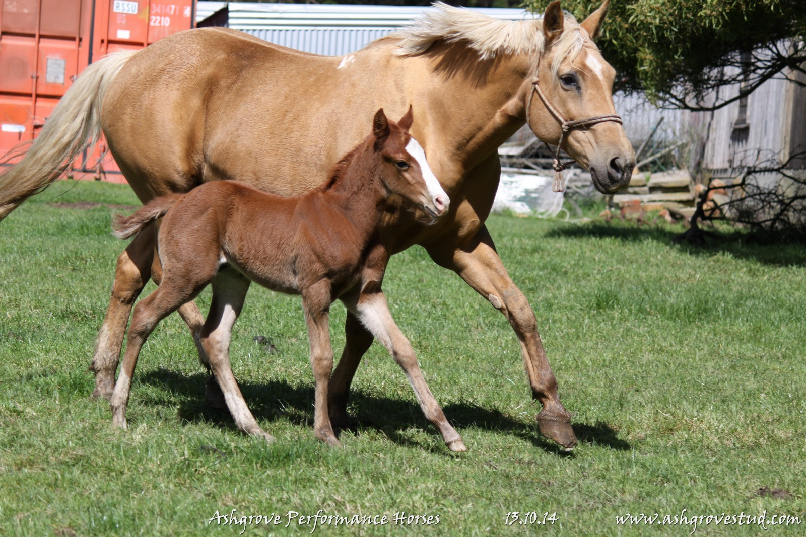 Foals and yearlings 13.10.14 177