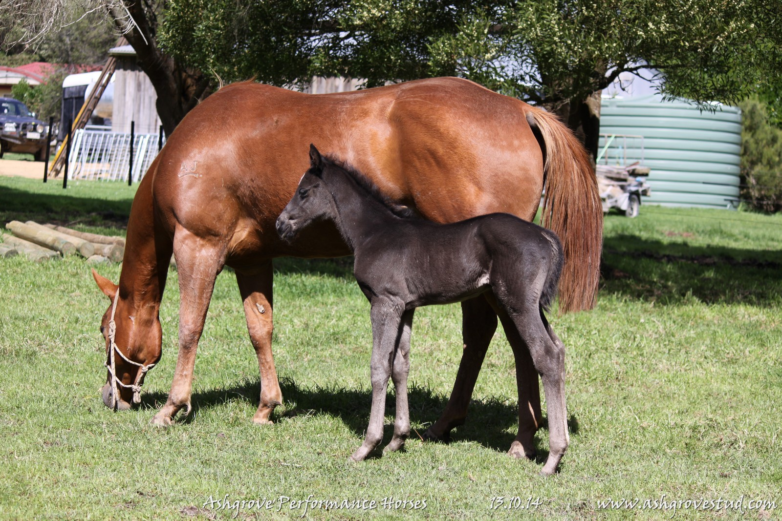 Foals and yearlings 13.10.14 201