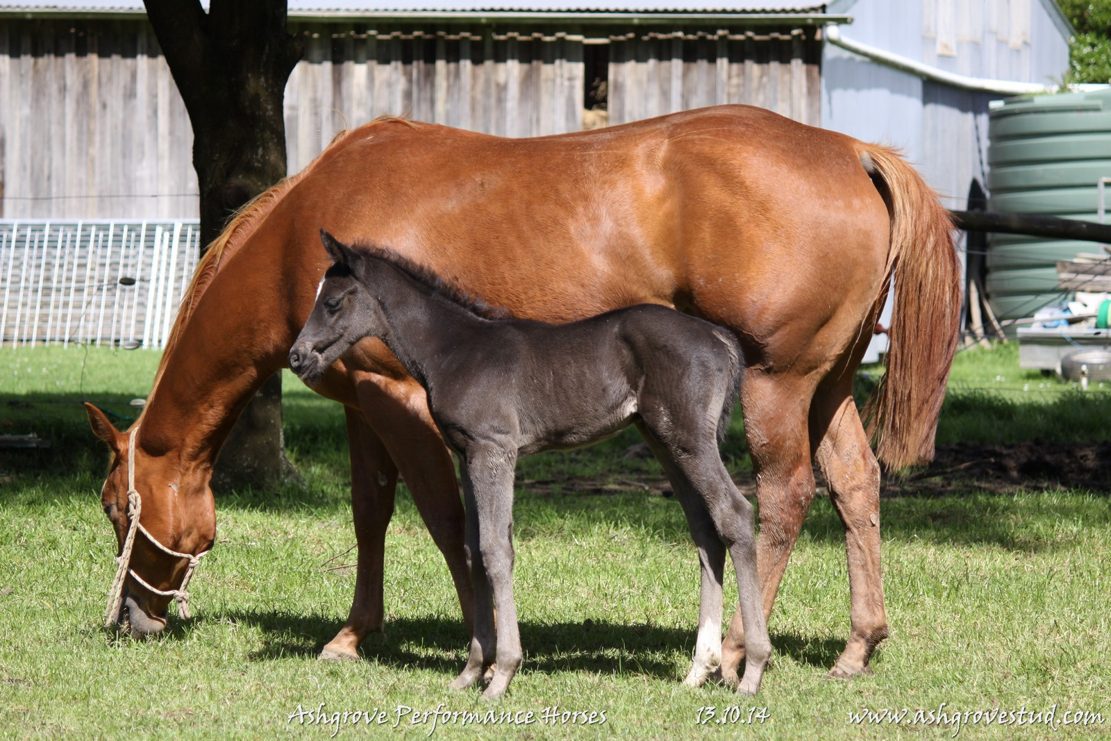 Foals and yearlings 13.10.14 218