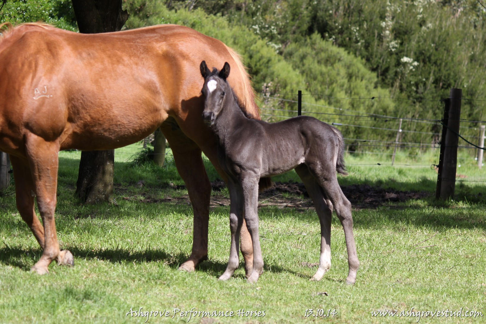 Foals and yearlings 13.10.14 243