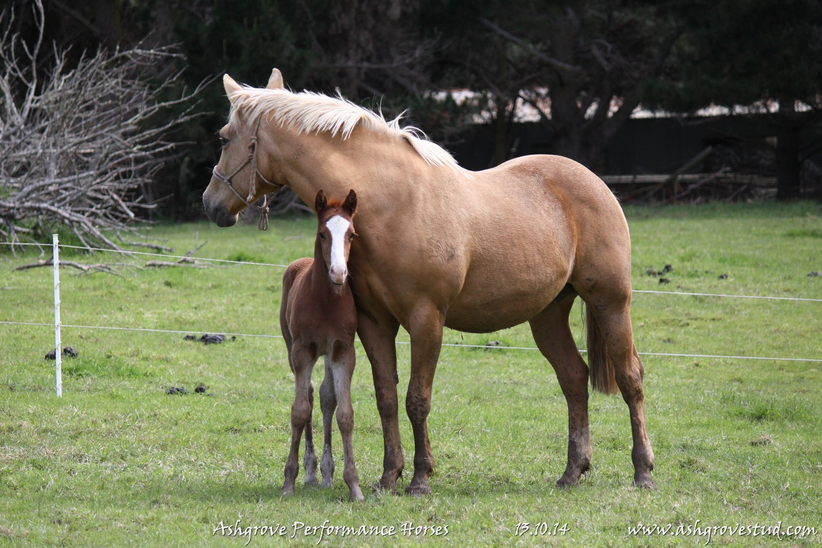 Foals and yearlings 13.10.14 307