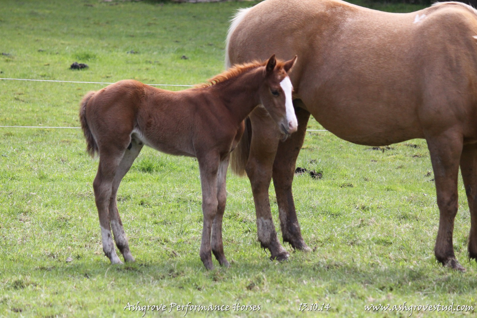 Foals and yearlings 13.10.14 320