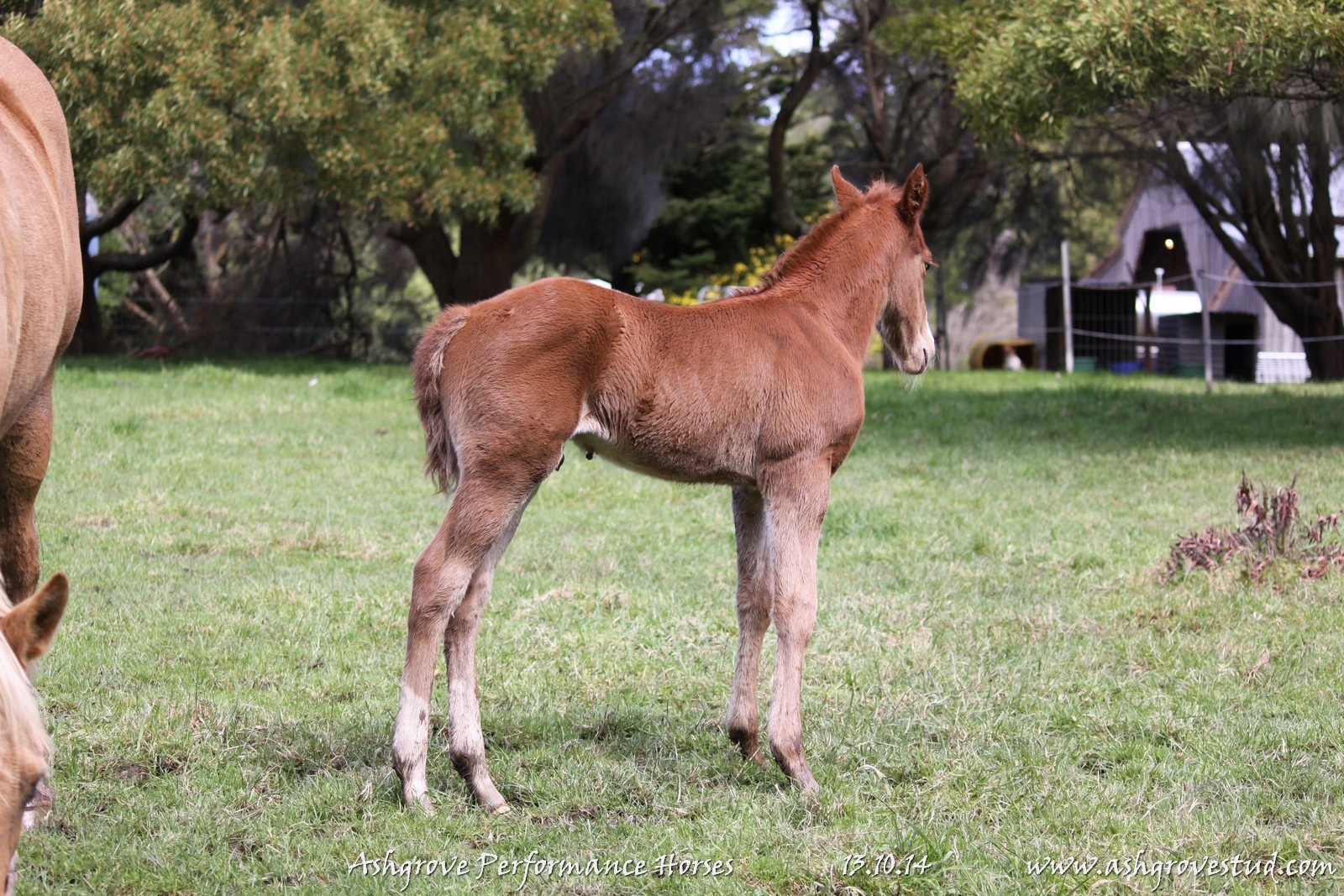 Foals and yearlings 13.10.14 333