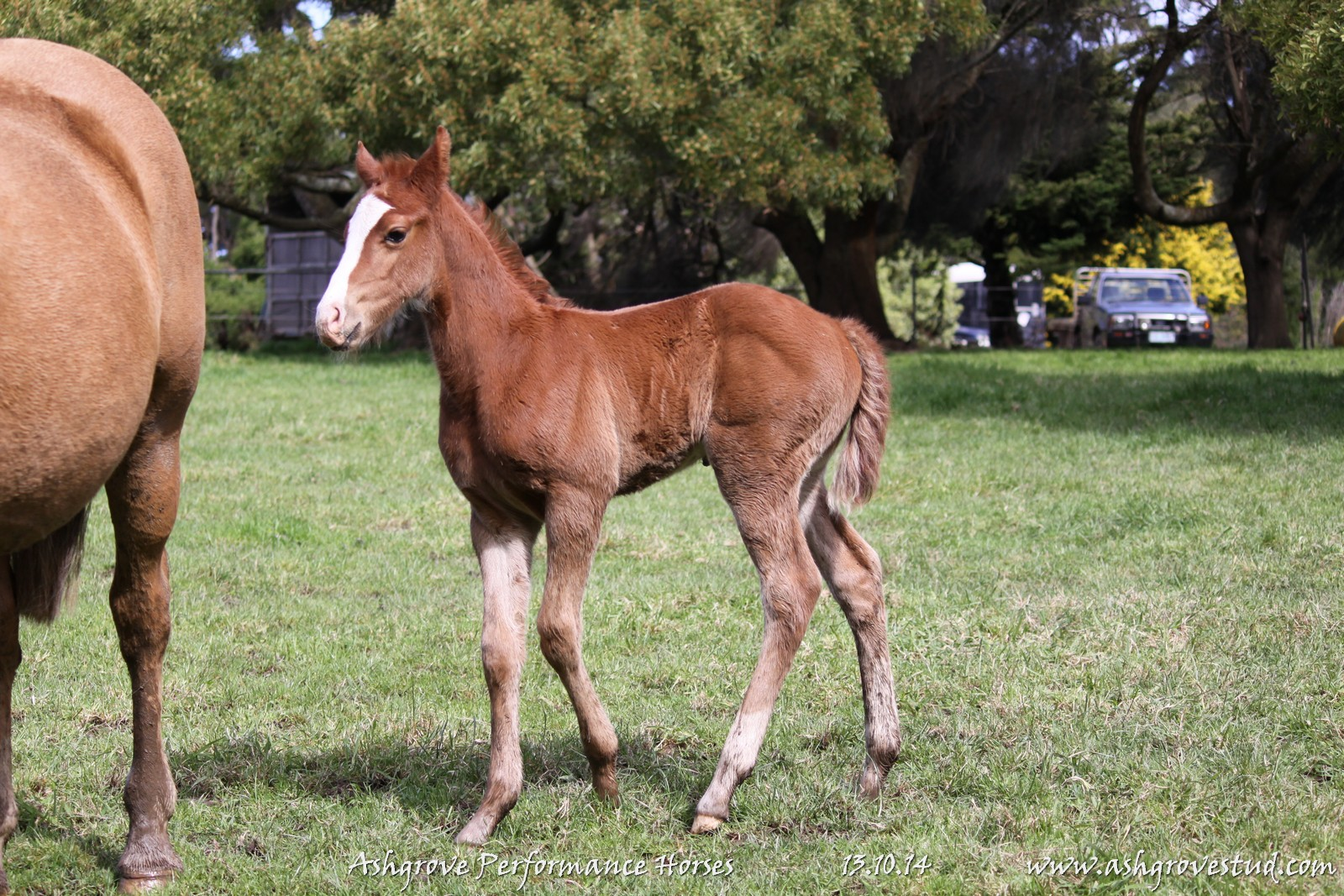 Foals and yearlings 13.10.14 342