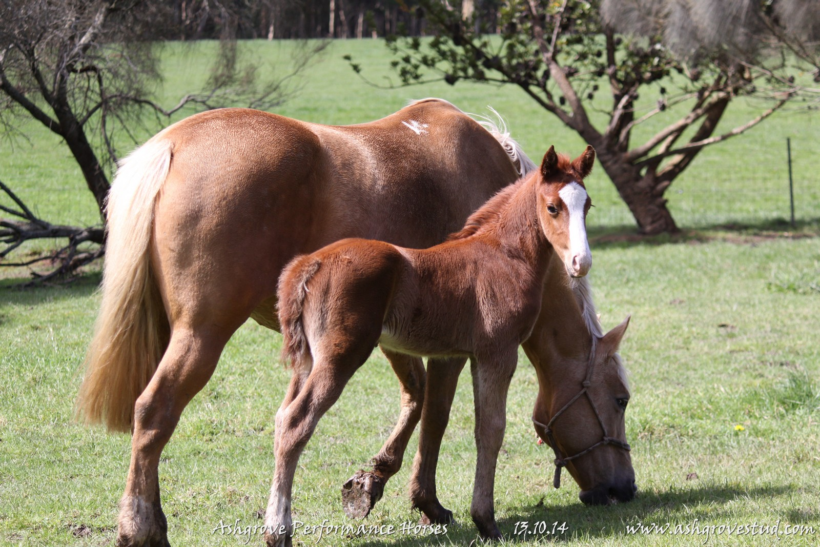 Foals and yearlings 13.10.14 360