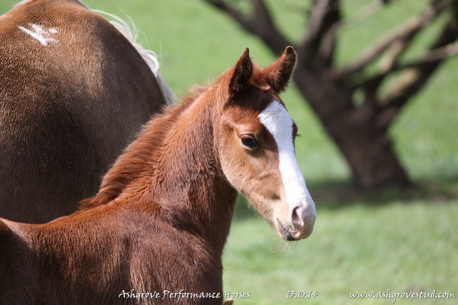Foals and yearlings 13.10.14 362