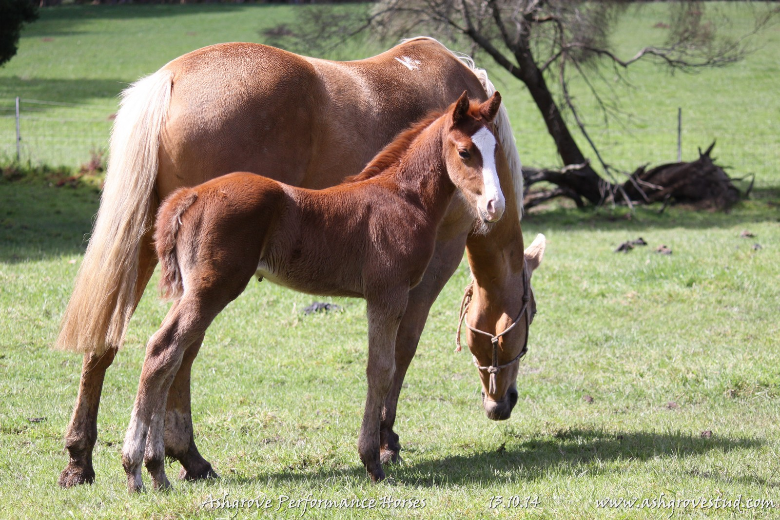 Foals and yearlings 13.10.14 366