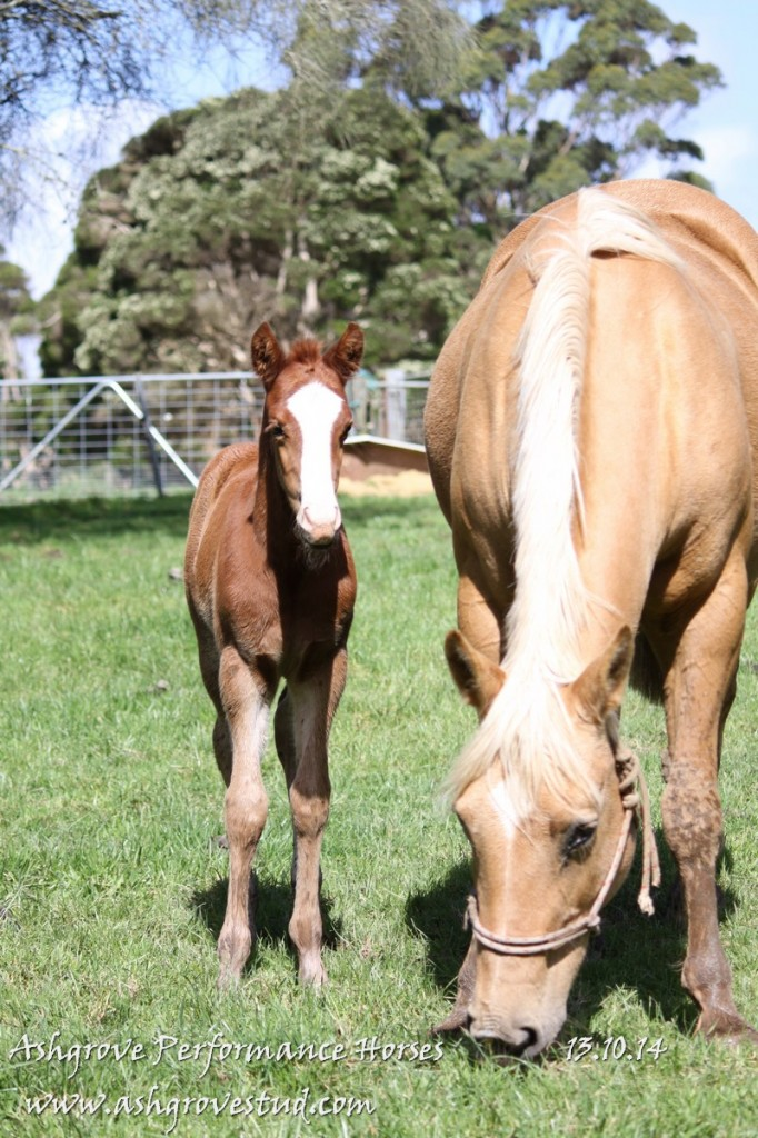 Foals and yearlings 13.10.14 384
