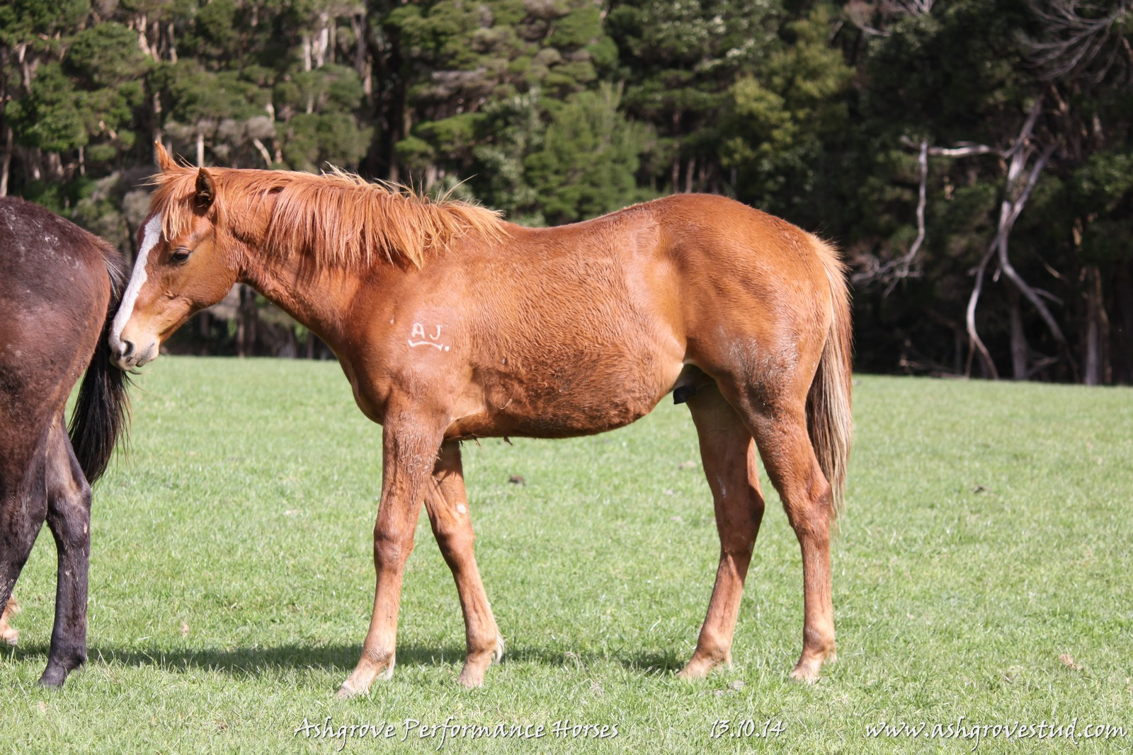 Foals and yearlings 13.10.14 582