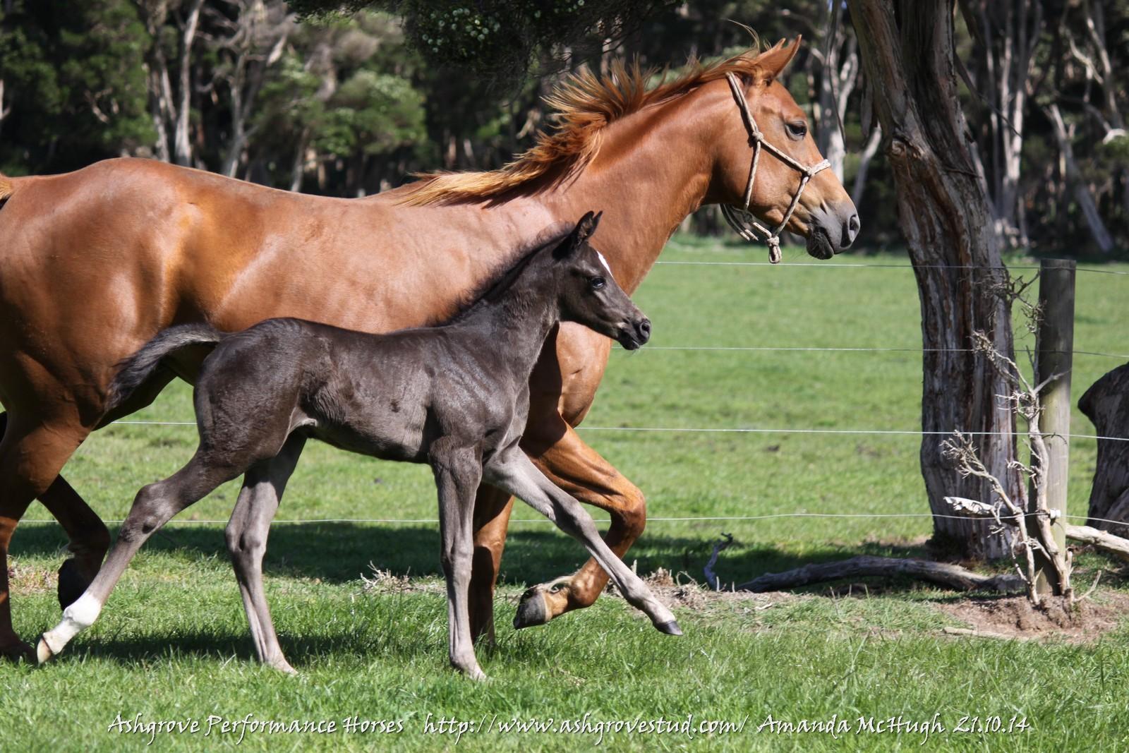foals 21.10.14 014
