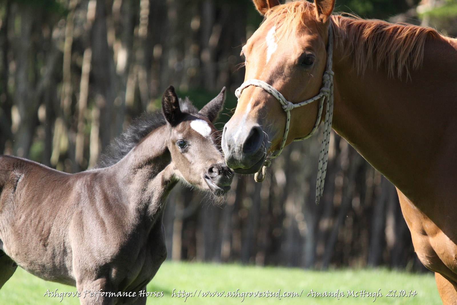 foals 21.10.14 351
