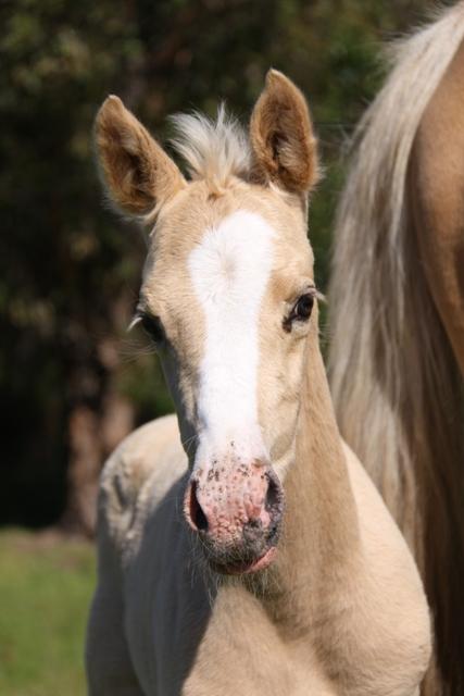 foals Nov 2011 156