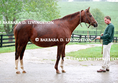 Secrettame at Mare Haven Farm, in May 2002, Kentucky.